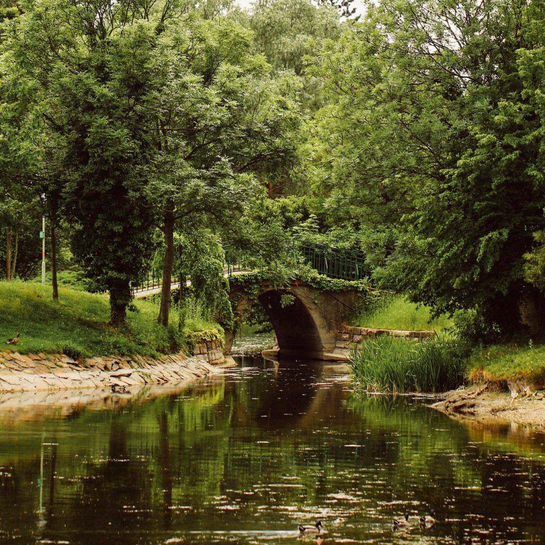 Liv an der alten Donau
